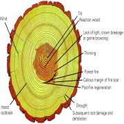 Tree Rings Explained Infographic